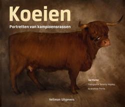 Koeien -portretten van kampioensrassen Porter, Val