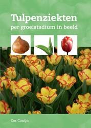 Tulpenziekten -per groeistadium in beeld Conijn, Cor