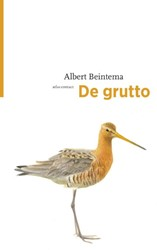 De grutto Beintema, Albert