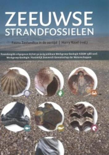Zeeuwse strandfossielen -fauna Zeelandica in de oertijd